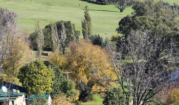 Accommodation Image for Elm Cottage Tumut