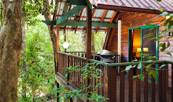 Accommodation Image for Mouses House Rainforest